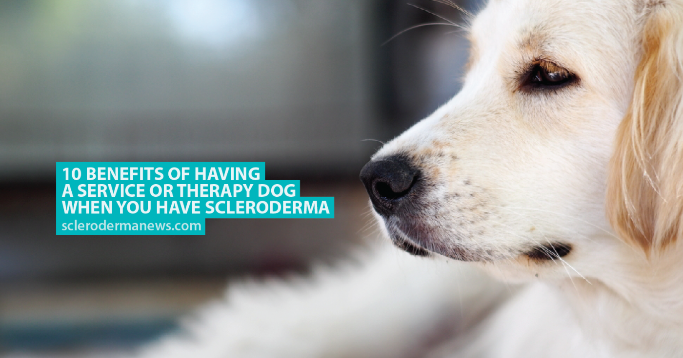 How to recognize and treat lichen in dogs