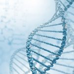 genes and disease risk