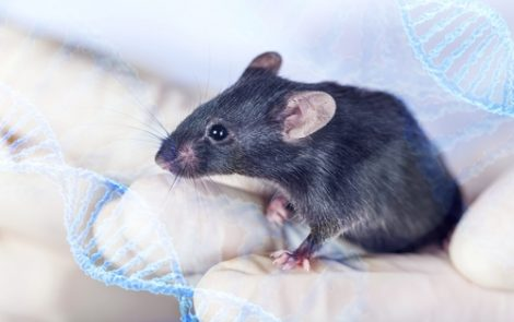 Antibody CD45-ADC Shows Potential to Treat Scleroderma and Other Diseases in Mice, Study Shows